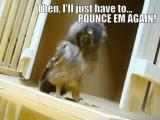 Owl punching