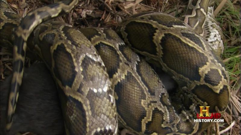 MonsterQuest Season 2- Episode 5 - Giant Killer Snakes