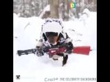 Собака-диверсант