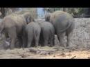 ПРЕССА ТАЙГАНА в Рамат Гане Часть11 Слоны