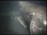 Megalodon sighting caught on Camera