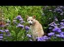История про Кошку и её Человека. Саша Бест слушать стихи
