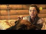 Кошки и собаки на даче Советы ветеринара FORUMHOUSE