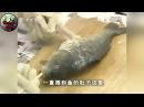 Китайский способ потрошить рыбу не вспарывая брюхо