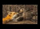 Как звери весну встречают Детям про зверей весной