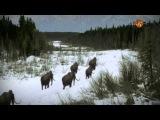 Вымерли ли мамонты