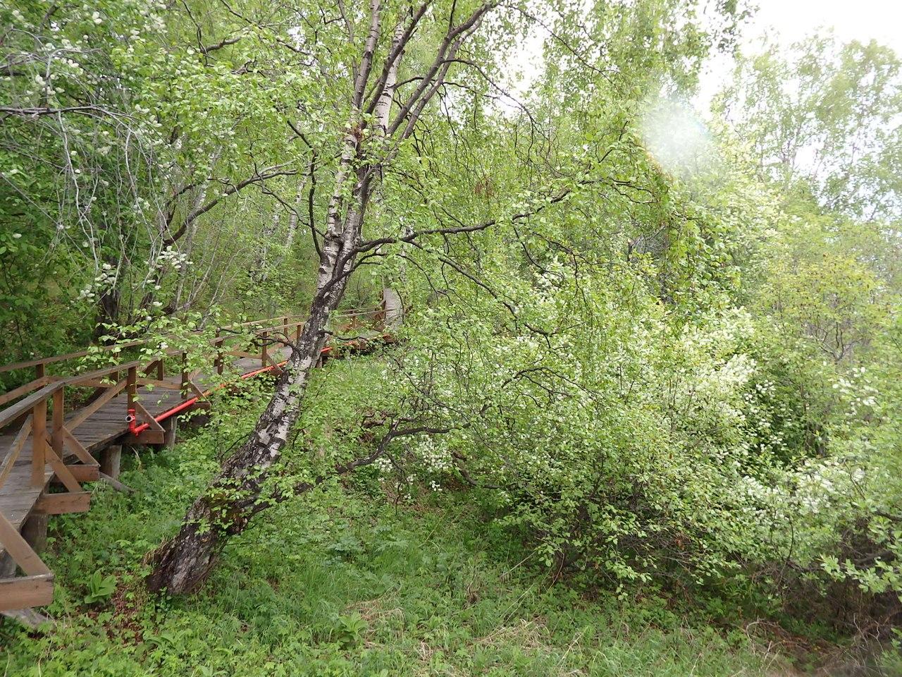 Фото города альметьевска
