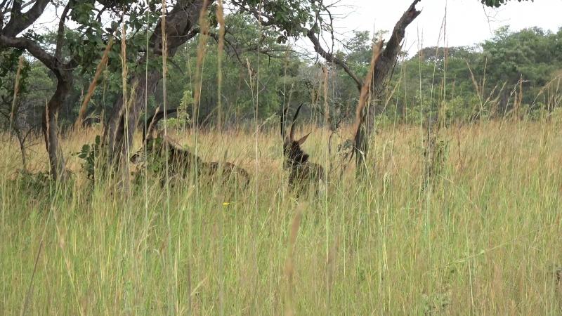 * Африка. Дикие животные