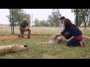 Animal Planet. Человек и львы Джабула заказник больших кошек / The Lion Man Jabula Big Cat Sanctuary / 2014 / 10