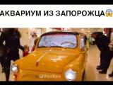 Вау!???#вайн #видео #смешно #vine #юмор #прикол #мило #юморист #ржака #приколы #смех #шутка #ржач #мем #LOL #fail #fails #smi