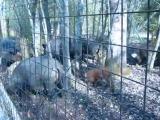 Дорога Бежецк - В Волочёк, Закрытый вольер для диких животных
