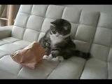 Я плакала Если заводить кота то только это придурка  - МатроскинТВ