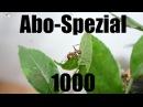 1000 Abo-Spezial Acromyrmex octospinosus