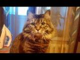 Смешная Кошка Варвара #02  #СеменАлиса