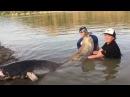 Łowienie sumów RIO EBRO || Wobler Donkey || Kołowrotek Amok || Wędka TrollSpin