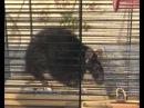 Крыса разговаривает и вздыхает