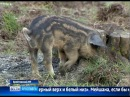 В Брейтовском районе поселились необычные животные из разных уголков мира