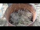 Выращивание огурцов в бочке.