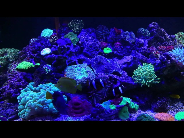 Морской аквариум 2500l Armenia Erevan 2015