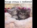 Любовь на двоих самое милое видео с маленькими котиками 😍💑