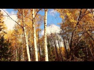 Звуки природы: березы, сосны, лес, пение птиц, яркие краски