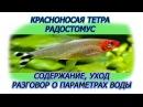 Красноносая тетра, Радостомус, сдержание, ухорд, кормление, разговор о параметрах аквариумной воды