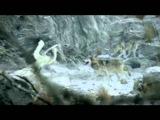 Футаж Аист несет ребенка скачать - для видеомонтажа детского фильма