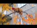 Осенний дресс-код прошли три участника конкурса «Разноцветный сентябрь» 29.09.20