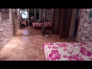 Мой ёбнутый нинзя-кот ^)