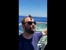 Уставший пернатый путешественник приземлился на голову мужчины в 25 километрах от берега