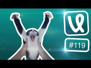 Лучшие ролики недели #119 Без кота и жизнь не та