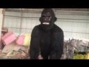 Animatronic Gigantopithecus на заводе