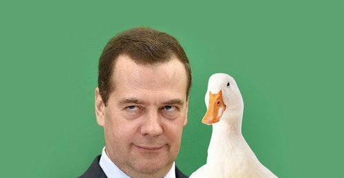 Элитный участок кедровой рощи в 4000 га, где находится дача премьера РФ Медведева, арендуют меньше чем за 1 доллар в год - Цензор.НЕТ 4550