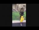 Охота Льва на ребёнка в зоопарке ...
