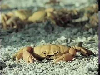 Жак-Ив Кусто - Забытый остров Клиппертон (1980) Подводная одиссея команды Кусто