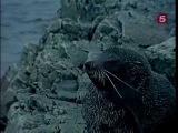 Жак-Ив Кусто - Кусто в Антарктике Часть IV Снежная буря в заливе Надежды (1974)