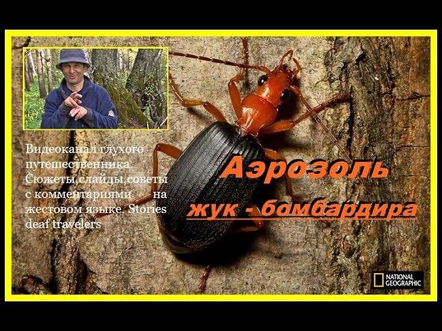 Аэрозоль жука - бомбардира