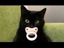 Приколы с кошками и котами 4. Подборка смешных и интересных видео с котиками и ко...