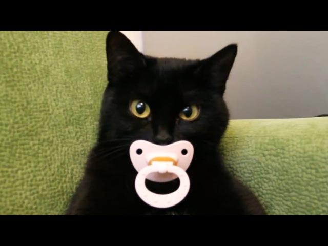 Смешные видео с котами \ ~Котаны~