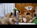Японские коты с игрушкой