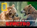 Бойцовский клуб для животных БУЙСТВО Документальные фильмы Nat Geo Wild HD