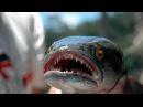 Рыбы-чудовища: Змееголов (Документальные фильмы Nat Geo Wild HD)