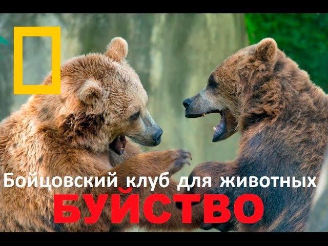Бойцовский клуб для животных: БУЙСТВО (Документальные фильмы Nat Geo Wild HD)