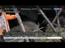 Новости на «Россия 24» • Уникальное открытие: якутские ученые нашли пещерного львенка в вечной мерзлоте