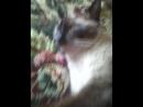 спящие смешные кошки