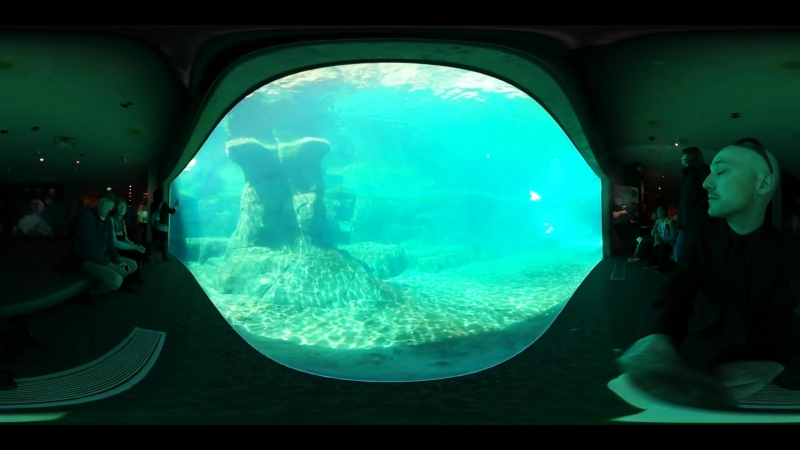 HD -This Is Me at Vancouver Aquarium in 4k 360 video for viewing in Virtual Reality Devicesundefined