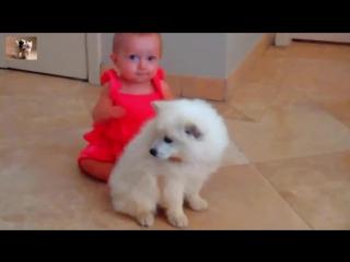 Веселые животные, приколы с собаками и детьми.