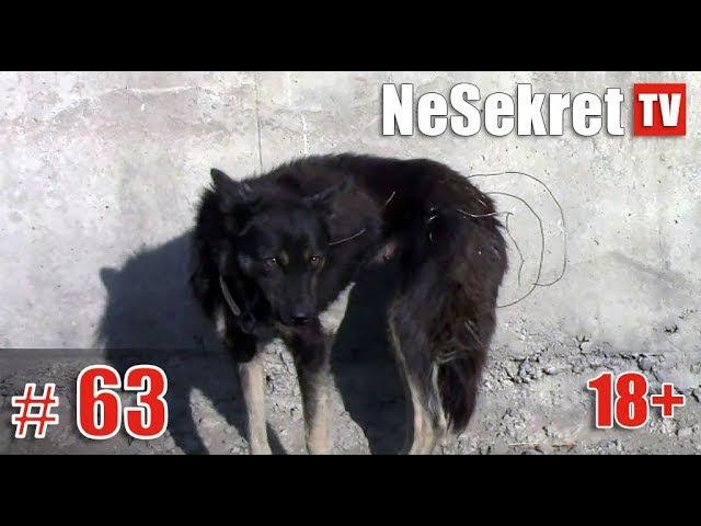 Спасение 63. Собака обмотанная проволокой. Город Улан-Удэ.