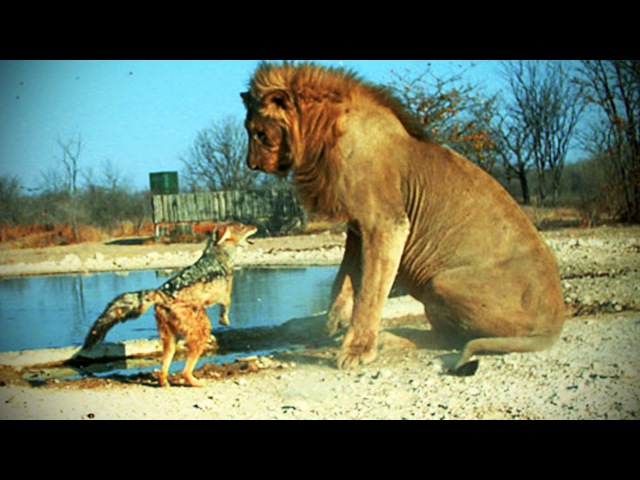 FEARLESS ANIMALS ★ Animals Who Are Not Afraid of Anything [TNT Channel]