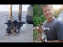 Котёнок летел с моста в реку Надежды на спасение не было но у судьбы были друг